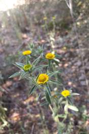 Type of flowers found around site